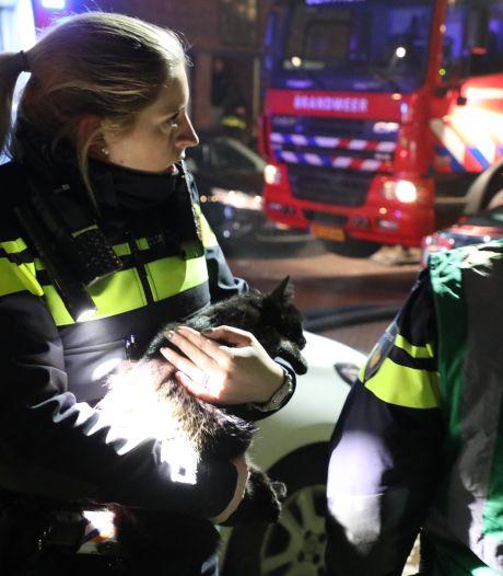 Brandweer blust keukenbrand en redt kat uit woning Linneausstraat