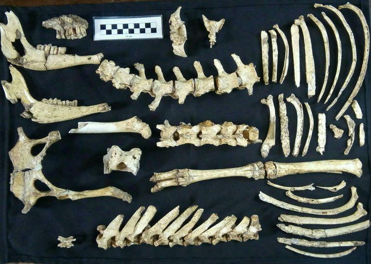 Fossiel Tv Meubel.Goed Bewaard Fossiel Van Prehistorisch Hert Gevonden In Argentinie
