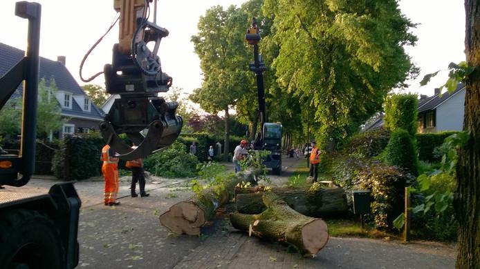 Noodkap van bomen in Nederwetten