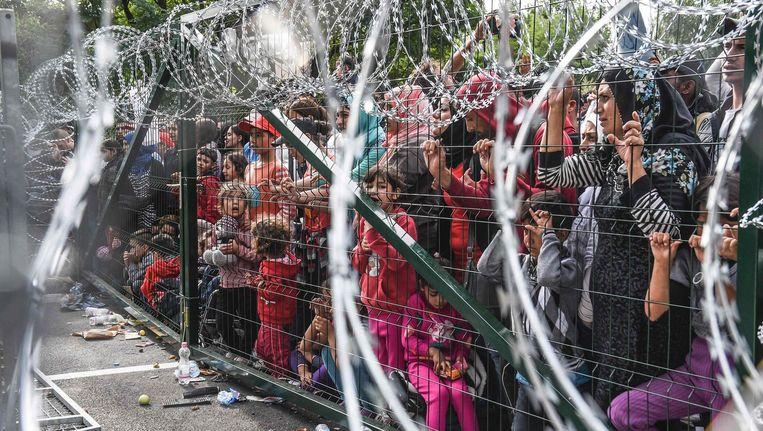 Het hek tussen Servië en Hongarije. Beeld AFP