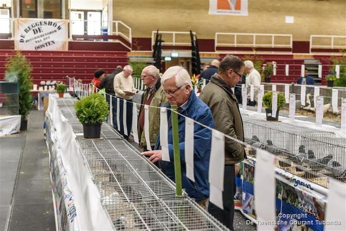 Reggeshow in de Reggehal in Rijssen: beeld bij de sierduiven.