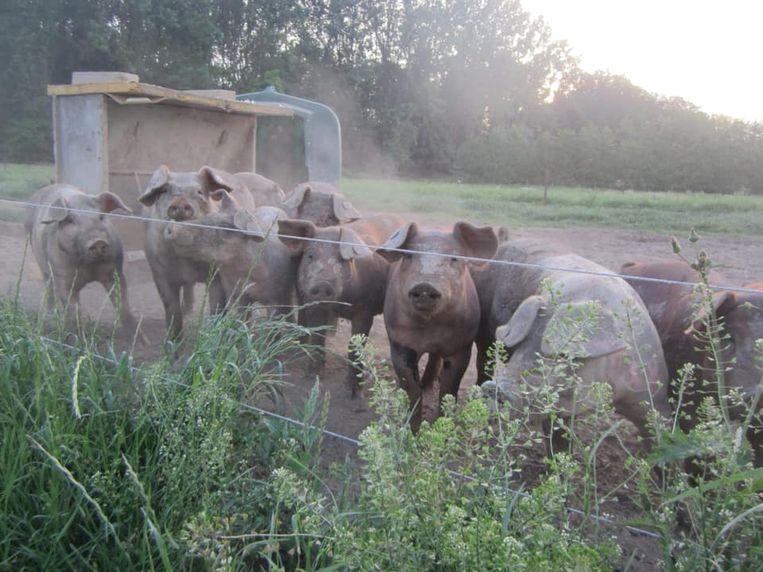 Gelukkige dieren in De Seizoenschuur