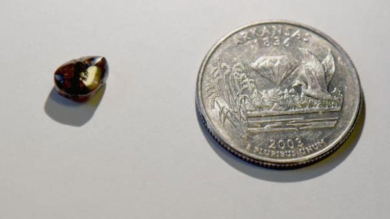 De diamant is amper zo groot als een jelly belly maar het is voorlopig wel de grootste van dit jaar in het park in Arkansas.