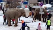 Ontsnapte circusolifanten gaan op wandel door de sneeuw