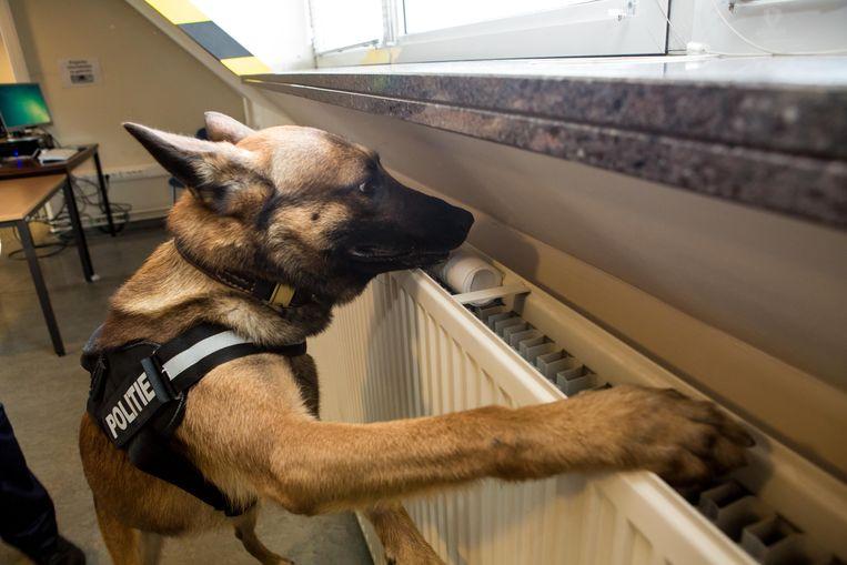 Acht drugshonden voerden in twee Kortrijkse middelbare scholen controles uit.