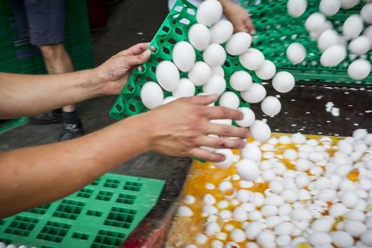 Eieren worden vernietigd bij een pluimveehouder.