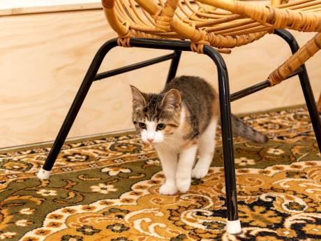 Katten domineren dag lang Zoetermeerse bibliotheek: 'We hopen kat en mens te kunnen matchen'
