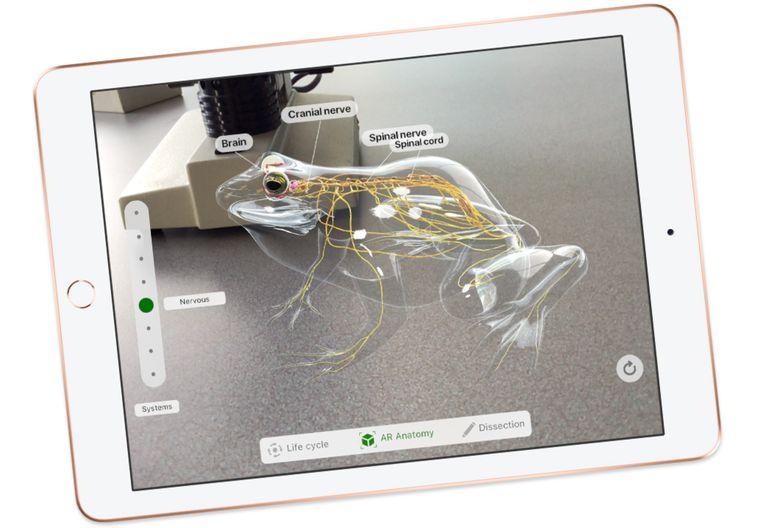 Froggepedia laat je virtueel een kikker dissecteren.