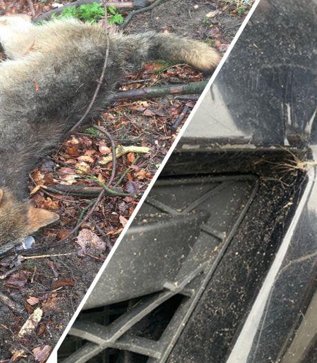 Brandweerman Harnold (52) uit Epe reed de wolf dood: 'Ik ben er absoluut niet trots op'