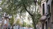 Bomen Berkendaalstraat mogen voorlopig blijven