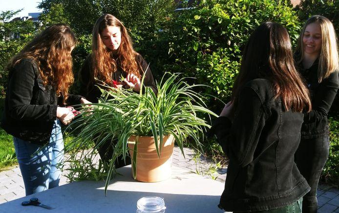 Enkele leerlingen van het Atheneum in Denderleeuw maken een eigen terrarium.