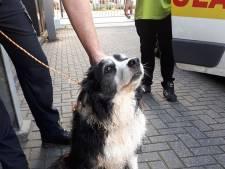 Hond ontsnapt uit tuin De Wijk en verdwaalt op A28