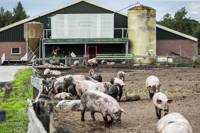 Het voorstel van D66 om de veestapel te verminderen zorgde deze week voor commotie.