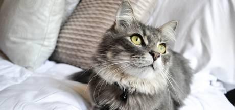 Kan ik er vanuit gaan dat de buren voor mijn katten zorgen?