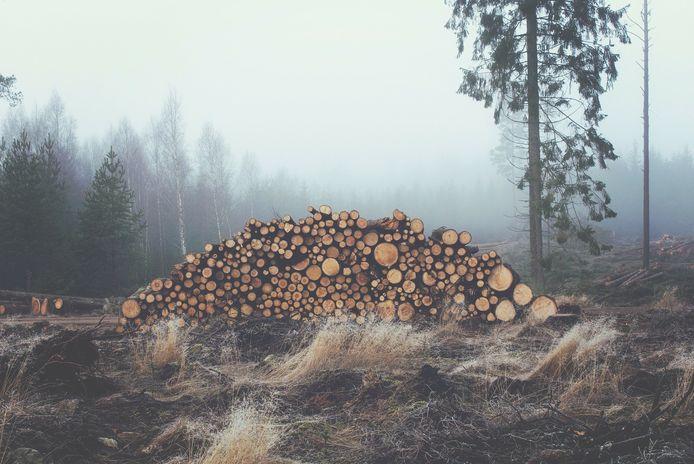 Op de website van Bosgroep Kempen Noord kan je bieden op verschillende brandhoutloten.