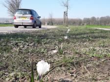 Maatregelen verkeersoverlast Sas van Gent