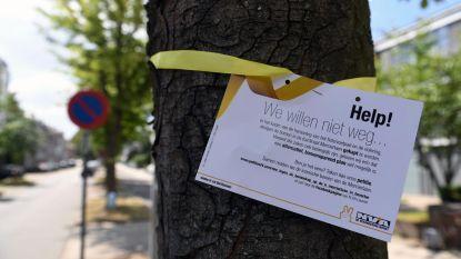"""Tobback: """"Enige die in Leuven bomen kapt, is Ben Weyts"""""""