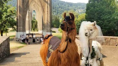 Zo vermijd je lama-drama en andere rampen op je huwelijk