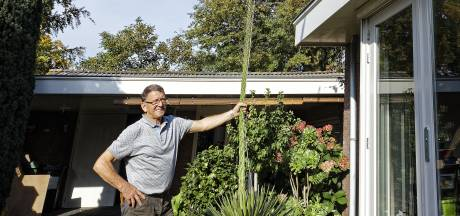 Dertig jaar deed ie niks, maar deze zomer blééf de agave van Herman en Diny van Beurden maar groeien