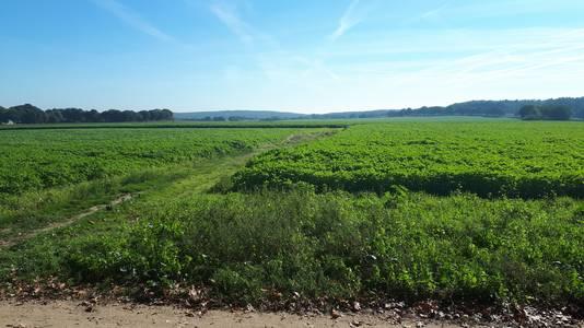 Het landschap tussen Groesbeek en Mook.
