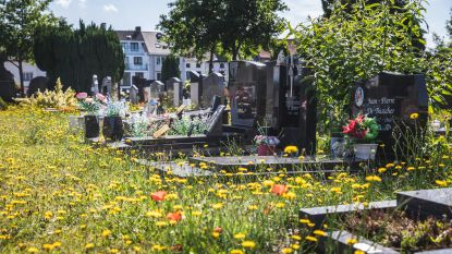 Begraafplaatsen laten 'verwilderen' is beleidskeuze