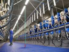 Innovatiecentrum in Holten speciaal voor geiten