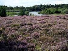 Brabantse Milieufederatie: 'Maak extensieve zone rondom natuur'