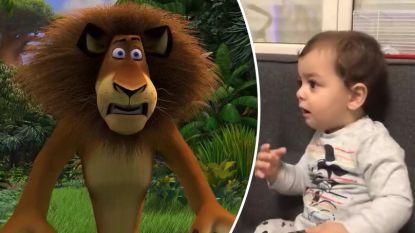 Kleine Arthur kijkt voor het eerst naar Madagascar. Zijn reactie als er plots een leeuw tevoorschijn springt is hilarisch