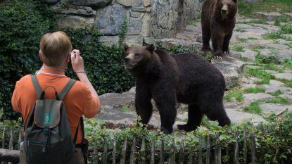 Wildpark van de Grotten van Han heropent donderdag