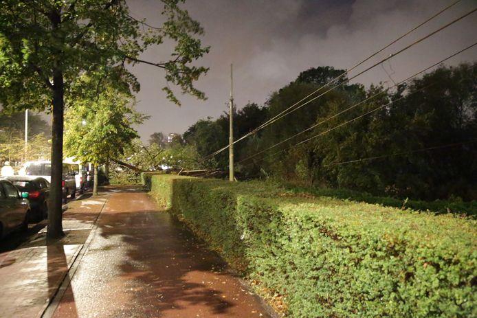 Een omgewaaide boom zorgt ervoor dat tram 9 even niet kan stoppen op deze halte.