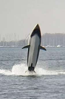 Meters uit het water springen in de buik van een haai