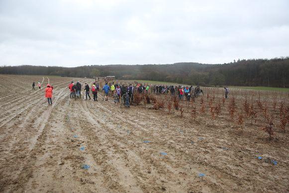 Vijf hectare weiden en velden worden beplant als nieuw stukje Hallerbos.