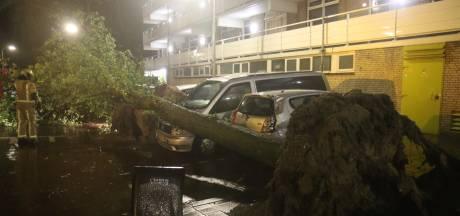 Acht auto's beschadigd door omvallende bomen in Den Haag