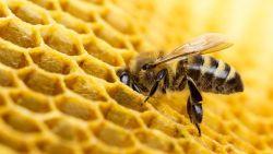 Europa bevestigt: beruchte groep pesticiden doodt bijen