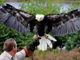 Mensen kijken massaal omhoog: zie ik de Amerikaanse zeearend vliegen?