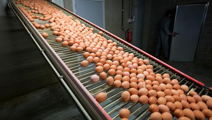 'Nederland heeft te lang gewacht met informatie doorspelen over de eiercrisis', aldus de Belgische minister van landbouw.