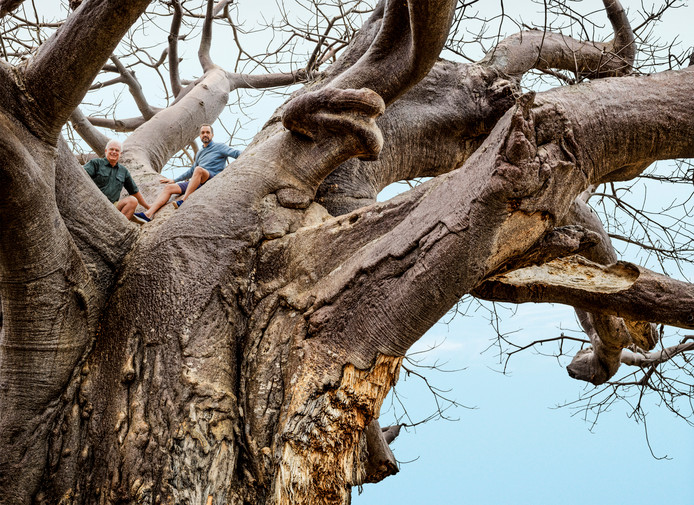 Albert Hartog in Botswana (links in de boom). Hij investeert in Afrikaanse wildparken, om diersoorten te herintroduceren. FOTO Martijn Steiner Lovisa/Quote