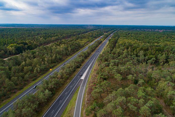 Het karakteristieke stukje groene snelweg tussen Wezep en Harderwijk. Rijkswaterstaat wil het bos aan weerszijden van de weg en in de middenberm flink uitdunnen,
