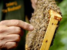 Opnieuw zorgen om 'vele honderden kasten' met honingbijen in Biesbosch
