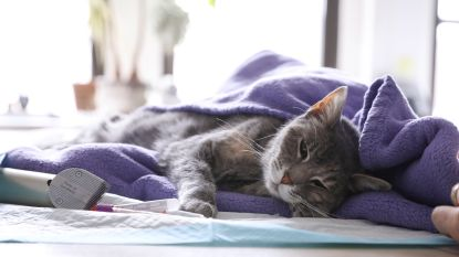 Nu ook kat in Hongkong positief op coronavirus