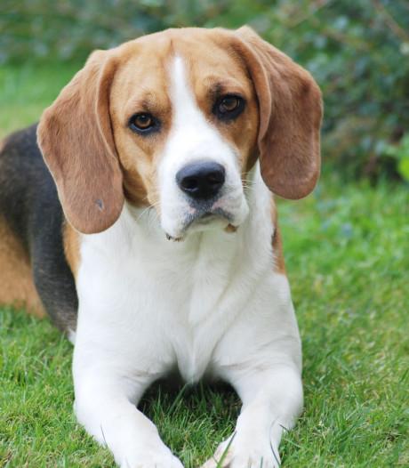 Mijn goeroe heet Fikkie: dit kunnen we leren van onze huisdieren