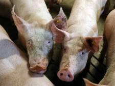 Geen uitbreiding, maar mogelijk verbouwing varkenshouderij Hulsel