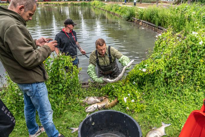 De dode vissen worden uit het water gehaald.
