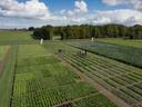 Demovelden van groenteveredelaar Rijk Zwaan in Fijnaart, aan de Eerste kruisweg