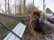 Marloes (57) ontsnapt nipt aan omgevallen boom: 'Ik heb een engeltje op mijn schouder'