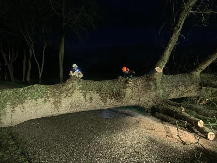 In Hellendoorn viel een dikke boom op de weg