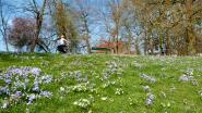 Unesco-experten zijn duidelijk: uitbreiding van Brugse stadsvaart kan niet op de Vesten