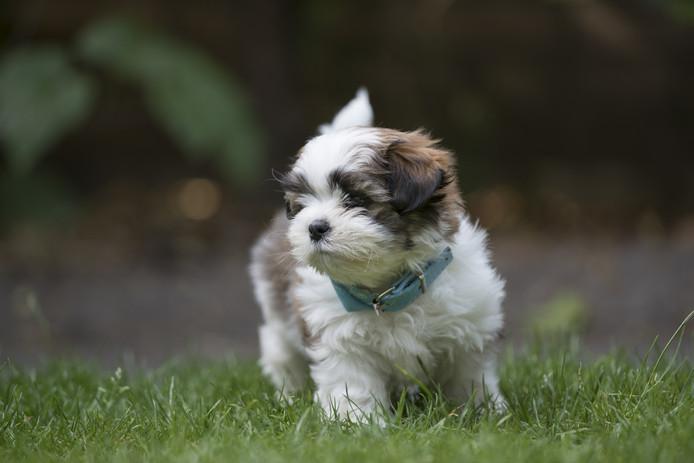 Een Boomer-hondje als deze werd zonder hoofd gevonden in het park.