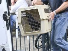 Dierenbescherming neemt 20 roofvogels en een raaf in beslag in woning Breda