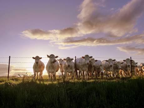 Deurne: meer dieren, minder veebedrijven